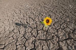 20234601-sol-sec-d-une-terre-aride-et-unique-plante-qui-pousse-Banque-d'images